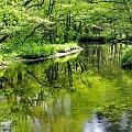 Chłodek Piaśnicy... lubię #rzeka #Piaśnica #cień #chłód