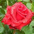 Kwiaty w krainie czarow #forum #KrainaCzarow #MojOgrod