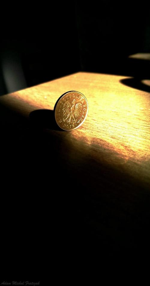 Makro #krzak #makro #Pieniądz #pieniądze #roślina #ślimak #zbliżenie