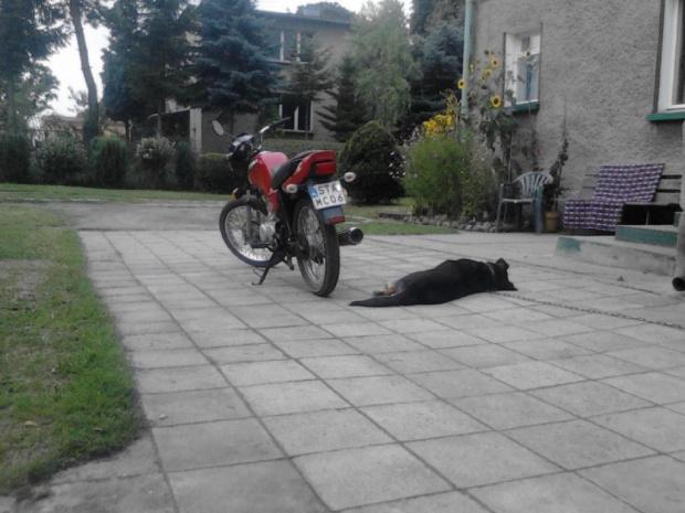 http://images62.fotosik.pl/162/5ef5a76a51f150c2gen.jpg