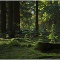 Na koniec lata #bitwa #fotografia #jesień #kwiaty #las #lato #natura #przesilenie #przyroda #rosa #wrzesień #wrzos #wrzosy #zając #zdjęcia #zmagania #fotmart #wojciechwrzesien #WojciechWrzesień