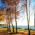 Barwy jesieni #Drzewa #brzozy #morze #jesień #Chałupy #wybrzeże