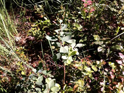 Nie rozpoznana roślina #NieRozpoznanaRoślina