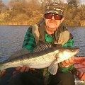 #fish #fishing #ryba #sandacz #spinning #wędkarstwo #zander