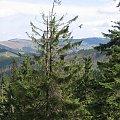 W tle wieża przekaźnikowa na Skrzycznym #Góry #BaraniaGóra #BeskidSląski