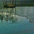 ...taka pora, taka uroda... #jezioro #woda #staw #Ożarów