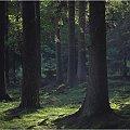 Jesieni leśne odstępy #las #jesień #fotmart #dzikapolska #wojtekwrzesien #natura #przyroda #fotografia #zima #lasy