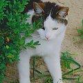Nasza kicia... #kot #kotki #koty