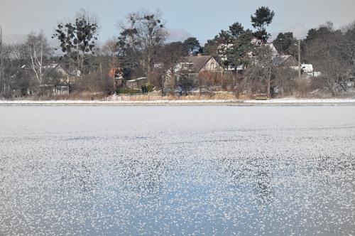 Sobieszewo - widok z mostu