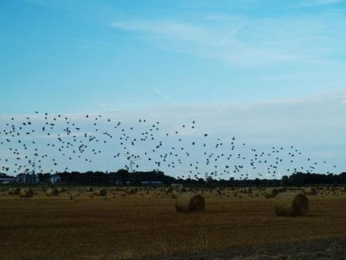 Ptaki #ptaki #pole #natura