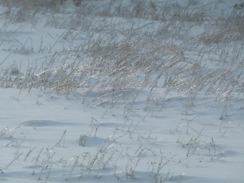 Lodowa łąka #Las #Przyroda #Ptaki #Śnieg #Zima