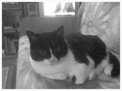 #Zwierzęta #Koty
