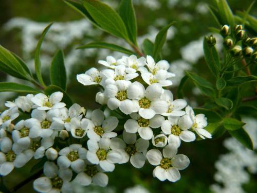 #kwiaty #działka #ogród #hobby