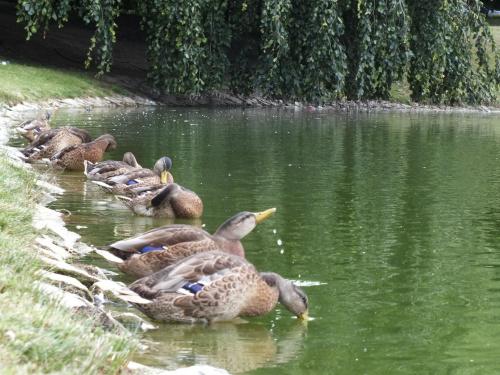 #kaczki #park #woda #zwierzęta