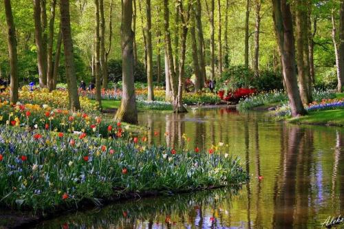 Keukenhof #kwiaty #park