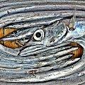 rybociąg #ryba