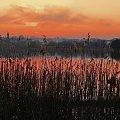 przez trzciny... #zachód #jezioro #sunset
