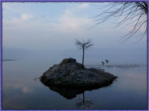 #jezioro #wysepka #wiosna #drzewko