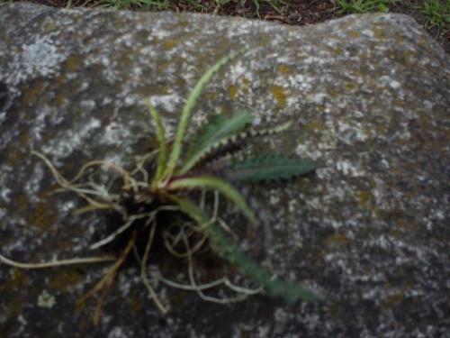 #rośliny