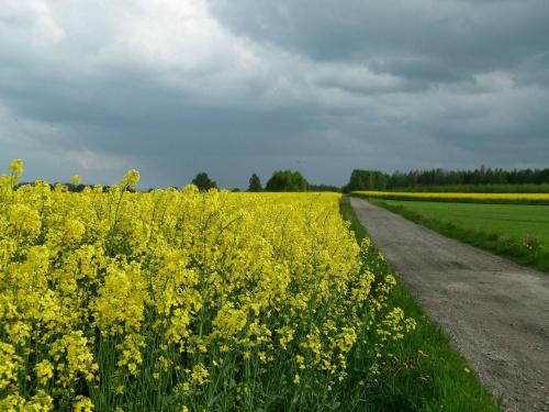 To nie kujawski #kwiaty #łąka #Natura #Polska #przyroda