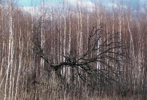 był las ... będzie las #las