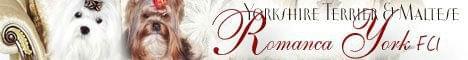 Romanca York FCI