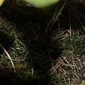 Ten sam żuczek:) #fauna #flora #przyroda #rośliny #zwierzęta