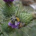 #fauna #flora #przyroda #rośliny #zwierzęta